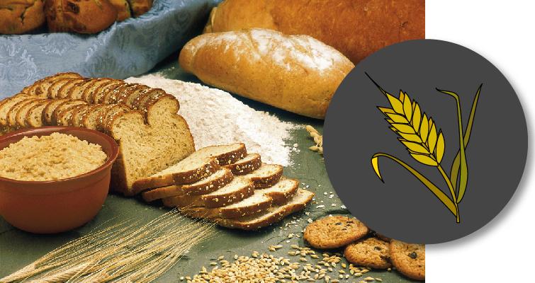 Portada con icono de cereales e imagen de panes