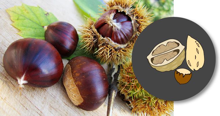 Portada con icono de frutos secos e imagen de castañas