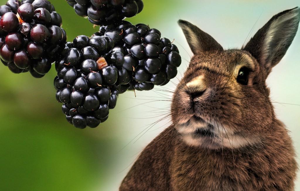 Declaración de AEPNAA sobre película Peter Rabbit