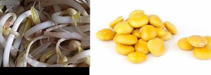 Presencia de SOJA y ALTRAMUCES en copos de arroz integral procedentes de España