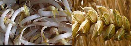 Presencia de soja y gluten en ensalada de algas procedente de China